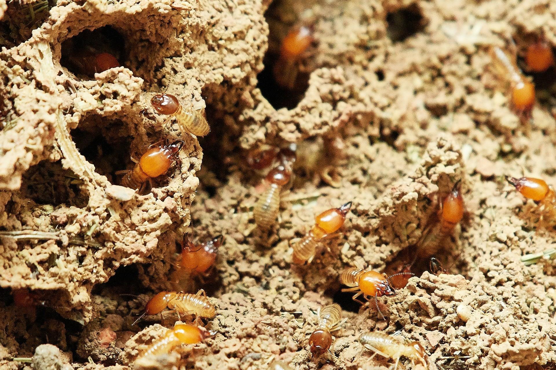 termites-3367350_1920